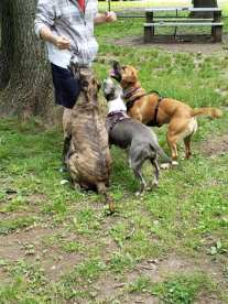 Madison Dog Park